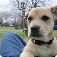 Adopt A Pet :: Skipper - courtesy post - Glastonbury, CT