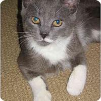 Adopt A Pet :: Georgie - Jenkintown, PA