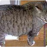 Adopt A Pet :: Jayne Doe - cincinnati, OH