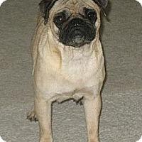 Adopt A Pet :: Pippi - Hinckley, MN