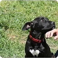 Adopt A Pet :: Nala - DFW, TX