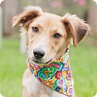 Adopt A Pet :: Jolee - Kingwood, TX