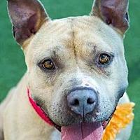 Adopt A Pet :: COURESY POSTING: Flower - San Diego, CA
