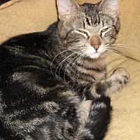 Adopt A Pet :: Elise - Roseville, MN