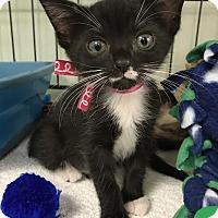 Adopt A Pet :: Lilly - Orlando, FL