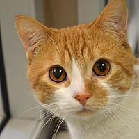 Adopt A Pet :: Tom - Edmonton, AB