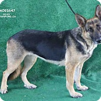 Adopt A Pet :: A093647 - Hanford, CA