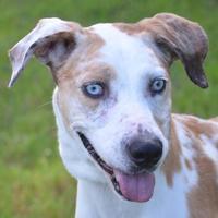 Adopt A Pet :: Gloria - Englewood, FL