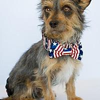 Adopt A Pet :: Rocky - Phelan, CA