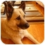 Photo 2 - Husky/German Shepherd Dog Mix Dog for adoption in Saskatoon, Saskatchewan - Scooby