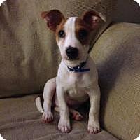 Adopt A Pet :: Baby Alvin - Marlton, NJ