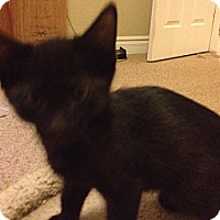 Adopt A Pet :: Cole - Chandler, AZ