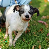 Adopt A Pet :: Henrietta - Tinton Falls, NJ