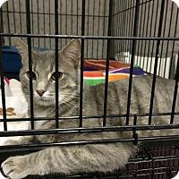 Adopt A Pet :: Alex - Byron Center, MI
