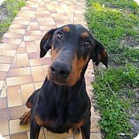 Adopt A Pet :: Mia - Fort Worth, TX