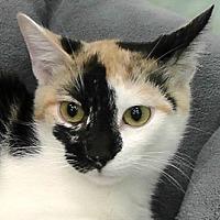 Adopt A Pet :: Patches - Redondo Beach, CA
