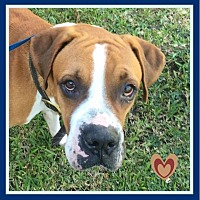 Adopt A Pet :: Rommell - Miami, FL