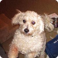 Adopt A Pet :: Tiffany-pending adoption - East Hartford, CT