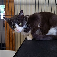 Adopt A Pet :: Sterling - Middletown, NY