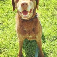 Adopt A Pet :: Faulkner - Oak Park, IL