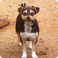 Adopt A Pet :: Iris - Tucson, AZ