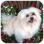Photo 1 - Maltese/Pomeranian Mix Dog for adoption in Los Angeles, California - THOR
