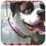 Photo 1 - American Bulldog Dog for adoption in Phoenix, Arizona - Lola