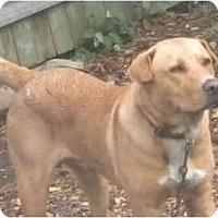 Adopt A Pet :: Dash - Farmingdale, NY