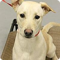 Adopt A Pet :: Destiny - Phoenix, AZ