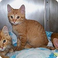 Adopt A Pet :: Mason - Dover, OH