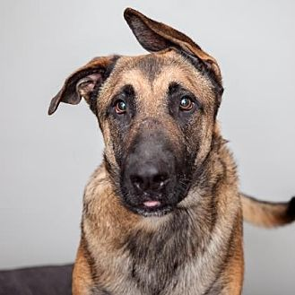 Mixed Breed (Large) Mix Dog for adoption in Mission Hills, California - Graham