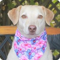 Adopt A Pet :: Lizzie - Garfield Heights, OH