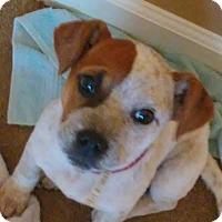 Adopt A Pet :: Glitter - Allentown, PA