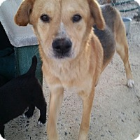 Adopt A Pet :: Applejack - Media, PA