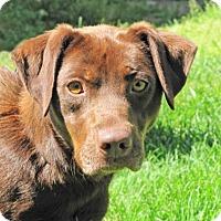 Adopt A Pet :: Gina - Woodstock, IL