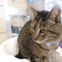 Adopt A Pet :: Kitty - Louisville, OH