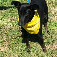 Adopt A Pet :: Daphne - Savannah, TN