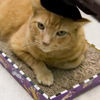 Adopt A Pet :: Dorito - Evansville, IN
