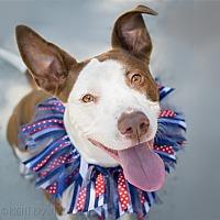 Adopt A Pet :: Sasha - Oakland, CA
