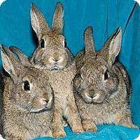 Adopt A Pet :: Maple & Hickory - Los Angeles, CA