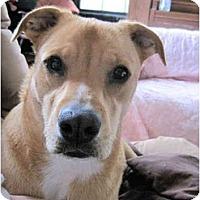 Adopt A Pet :: Simba - Winnsboro, SC