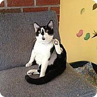 Adopt A Pet :: Bood - Lancaster, MA
