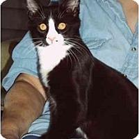 Adopt A Pet :: Finn - Montgomery, IL