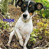 Adopt A Pet :: Hope - North Palm Beach, FL