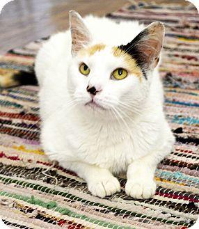 Calico Cat for adoption in Xenia, Ohio - Lydia