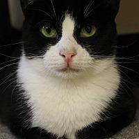 Adopt A Pet :: JESSIE - levittown, NY