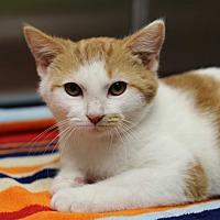Adopt A Pet :: Doc - Marietta, GA