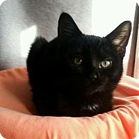 Adopt A Pet :: Bojingles - Cleveland, OH