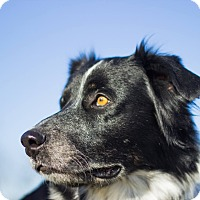 Adopt A Pet :: ROMEO - Georgetown, KY