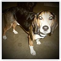 Adopt A Pet :: SOLO - Medford, WI